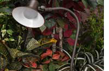 Easy Preventative Ways to Maintain Your Landscape Lighting
