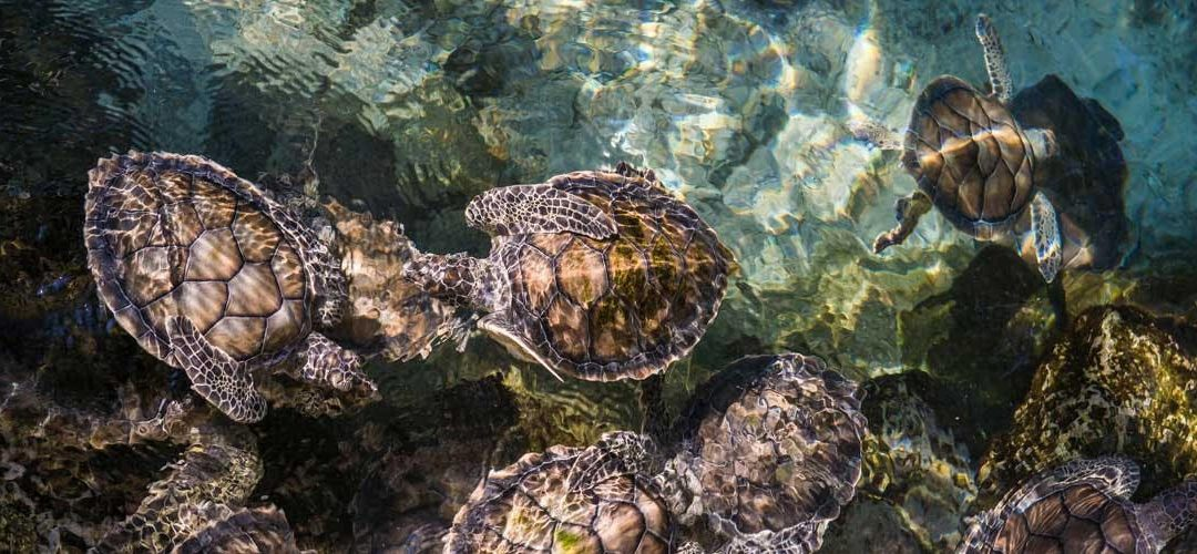 Sea Turtle Lighting Compliance 2021