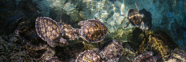 Sea Turtle Lighting Compliance Palm Beach County 2021
